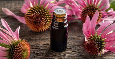 Las propiedades de la equinácea y sus 6 beneficios para la salud